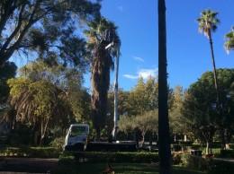 monitoraggio_alberi_villa