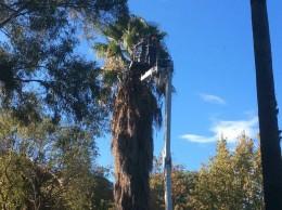monitoraggio_alberi_villa_1